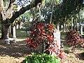 Houston Pioneer Cemetery 3.jpg