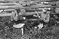 Houthakkers aan de lunch tussen boomstammen, Bestanddeelnr 920-4715.jpg