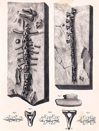 Hylaeosaurus - Specimen referred to H. oweni