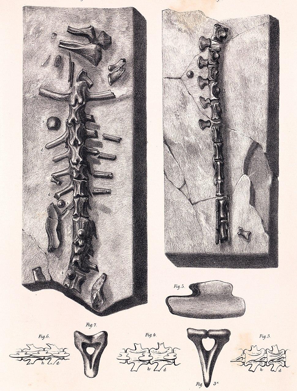 Hylaeosaurus oweni