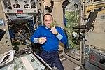 ISS-55 Anton Shkaplerov eats red romaine lettuce in the Zvezda Service Module.jpg