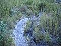 Ice on Agulhas Negras trail^ - panoramio.jpg
