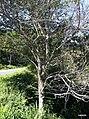 Iguape - SP - panoramio (249).jpg