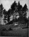 Il Trentino 61.tif