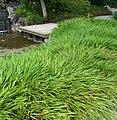 Im Japanischen Garten - panoramio (1).jpg