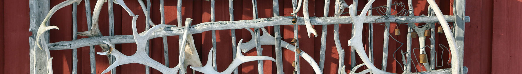 Antlers of reindeer at a farm in Inari