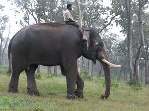 Mathikettan Shola National Park - Image: Indian Elephant