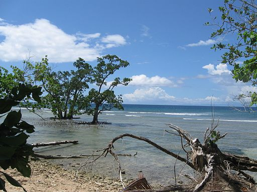 Indonesia (New Guinea Island)(32)