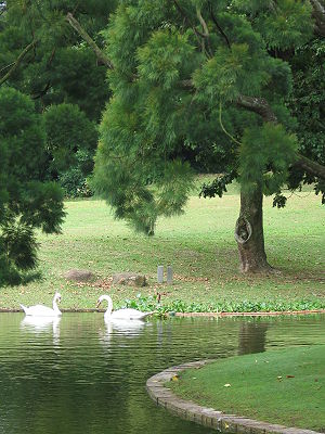 Istana (Singapore) - A swan lake on the grounds of the Istana