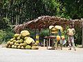 Jack fruit Mysore-Madikeri Road AJTJ P1110851.JPG