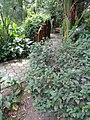 Jardín Botánico de Quito (pic.b)167.jpg