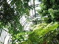 Jardin des plantes Paris Serre de l'histoire des plantes4.JPG