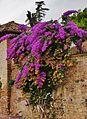 Jardines del Generalife, Granada 19.JPG