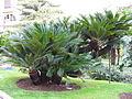 Jardinmonaco8.jpg