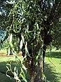 Jawaharlal Nehru Memorial Botanical Gardens, Srinagar 10.JPG