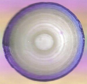 Gobstopper - Split single-coloured Ferrara Pan gobstopper showing layers of sugar