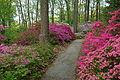 Jenkins Arboretum - DSC00557.JPG