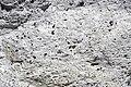 Joe Lott Tuff (Lower Miocene, 19 Ma; Joe Lott Creek Canyon, Tushar Mountains, Utah, USA) 6.jpg