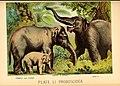 Johnson's household book of nature (Plate LI) (7268683898).jpg