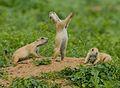Jump-Yip! (7116010457).jpg