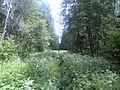 Kalininsky District, Tver Oblast, Russia - panoramio (18).jpg