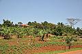 Kampala 2009-08-27 10-48-19.JPG