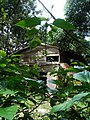 Kampung house in the jungle.jpg