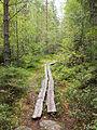 Kangasvuori nature trail - duckboard.jpg