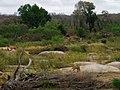Kapama private réserve.- les Lions.jpg