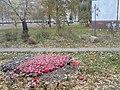Kastryčnicki District, Mogilev, Belarus - panoramio (706).jpg
