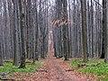 Kemence, Hungary - panoramio - Kaszás Tibor (5).jpg