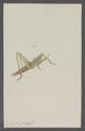 Kend - Print - Iconographia Zoologica - Special Collections University of Amsterdam - UBAINV0274 066 02 0086.tif
