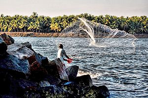 English: A fisherman in Kerala, India. A fishe...