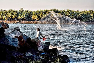 Fishing techniques - A fisherman casting a net in Kerala, India