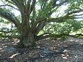 Kew Gardens P1170601.JPG