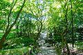 Kitanomaru Park - Tokyo, Japan - DSC04829.jpg