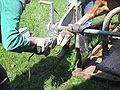Klauenpflege Kuh 9781.jpg