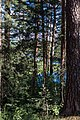 Klepikovsky District, Ryazan Oblast, Russia - panoramio (38).jpg