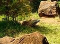 Komodo Dragon (4565234742).jpg
