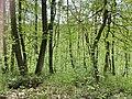 Kosmaj forest 7.jpg