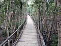 Kotka Camp Boardwalk (28063349840).jpg