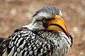 Kruger National Park, South Africa (14985745731).jpg