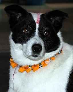 Kukur Tihar Annual festival originating from Nepal