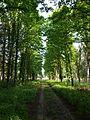 Kulykivskyi Park (03).jpg