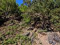 LSG Obere Saale Steilhang an der K 181 3 DE-TH.jpg