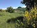 La Pietra Parcellara e i fiori di campo.jpg