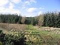 Ladfield Plantation - geograph.org.uk - 353879.jpg