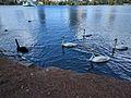 Lake Eola (30254151082).jpg