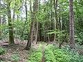 Landschaftsschutzgebiet Horstmanns Holz Melle -Im Wald- Datei 4.jpg