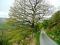 Lane from Cwm-mawr - geograph.org.uk - 1288882.jpg